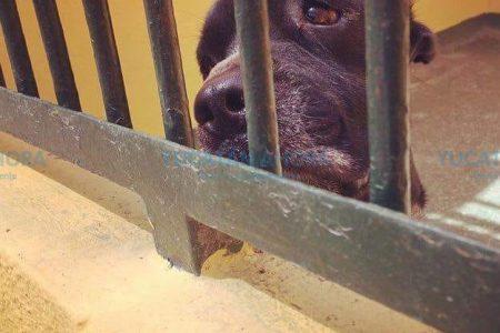Proponen guarderías y cuidadores de mascotas durante las vacaciones
