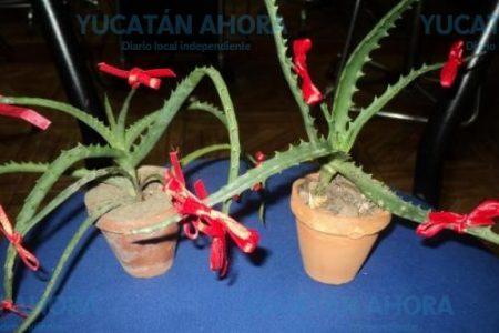 La sábila, una planta que ayuda a que todo salga bien