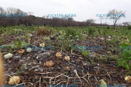 Luchan para que no se siga envenenando el suelo, aire, flora y fauna