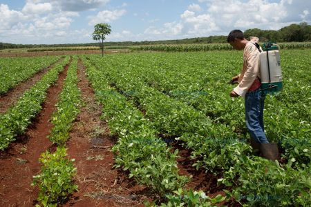 Exitosas experiencias del campo yucateco serán exhibidas en la Feria Agroalimentaria