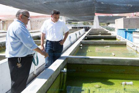 Yucatán es líder exportador de peces y plantas de ornato