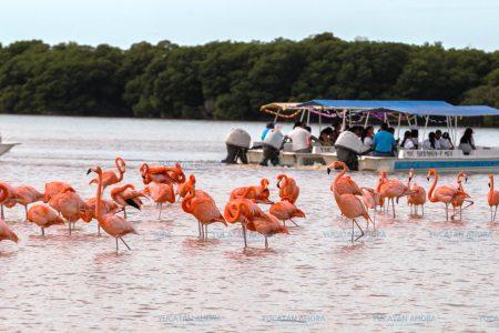 Superan El Corchito y Ría Celestún el número de sus visitantes