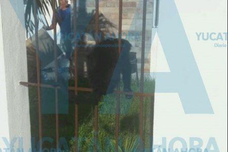 Encuentra un mono saraguato en el jardín de su casa