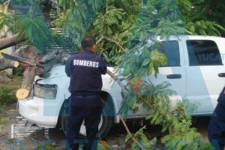 Alarma de su camioneta le anticipa el desastre que vieron sus ojos
