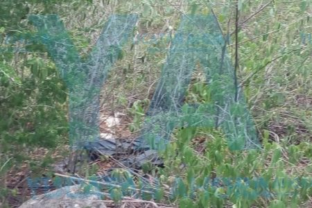 Encuentran cadáver en una brecha de la carretera Cholul-Sitpach