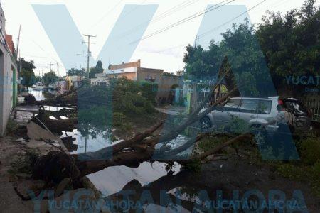 La lluvia fue letal para los árboles en Mérida