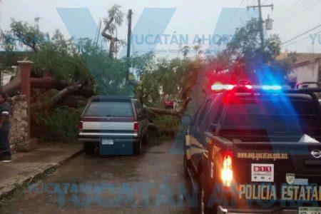 Se 'costea' un flamboyán: daña una casa, un poste de Telmex y un auto