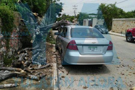 Día y lugar equivocado: cae sobre su auto un flamboyán seco