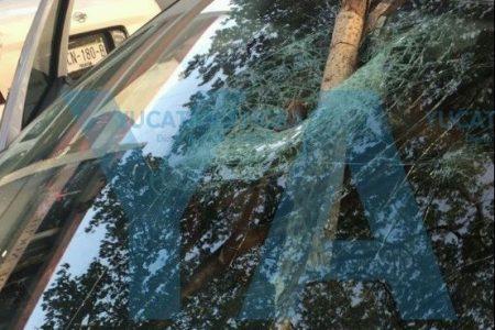 Lo 'choca' una rama seca, le rompe el panorámico y lo envía al hospital