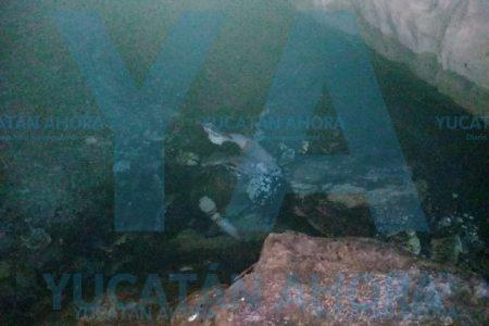 Se ahoga indigente que fue a buscar agua a un cenote