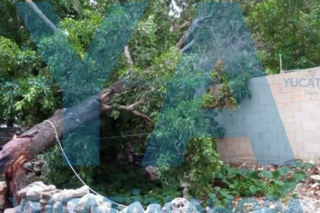Mucho ruido, pocos daños de la caída de un árbol en el sur de Mérida