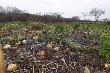 Ganadero bombardea con pesticida comunidades mayas y reserva ecológica