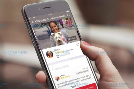 Llega a Mérida DogHero, el Airbnb para las mascotas caninas