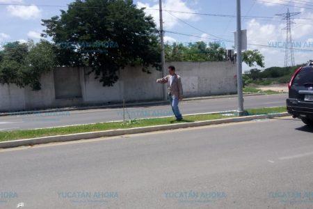 El Ayuntamiento denunciará por la destrucción de arbolitos en Cholul