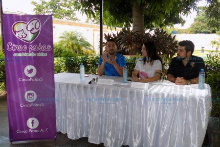 Piden apoyo para esterilizar a mascotas de personas de escasos recursos