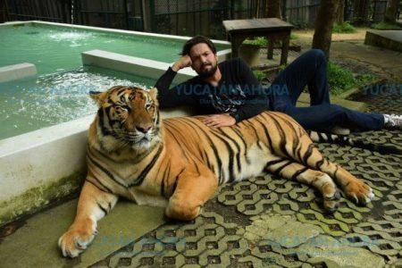 Bajo custodia policiaca hombre atacado por un tigre en Yucatán