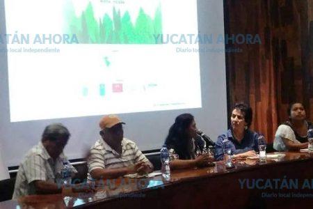 Machetazos entre ejidatarios de Muna por conflicto de la planta de energía solar