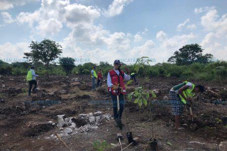 Innovador: siembran árboles antes de entregar casas en fraccionamiento meridano