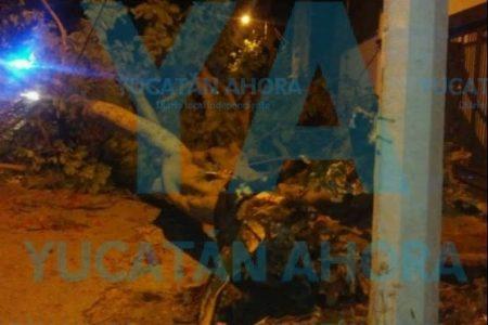 Cae gigante muerto desde sus entrañas por la contaminación en el norte meridano