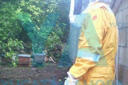 Masivo y mortal ataque de abejas contra dos pitbull en Peto