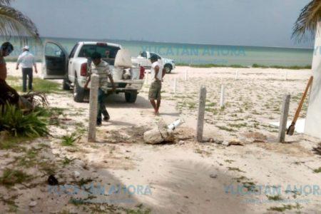 Multan a patrulla de Progreso por transitar en zona de anidación de tortugas