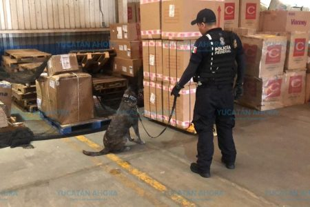 Decomisan 135 kilos de marihuana ocultos en un envío de paquetería