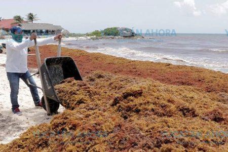 Reconocen que el sargazo afectó la temporada veraniega en Quintana Roo