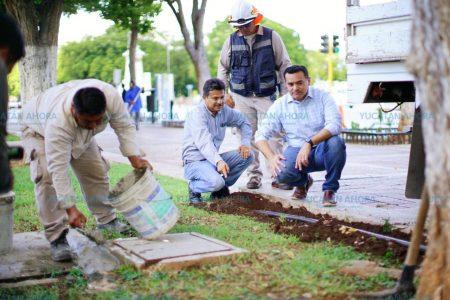 Servicio de limpieza y mantenimiento a las avenidas Cupules y Colón 24/7