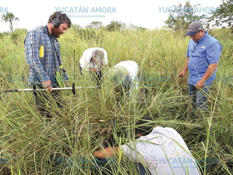 Desde Yucatán modifican ADN de langostas para que no se agrupen y arrasen cosechas