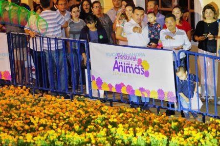 El Camino de Flores resalta el legado cultural de los yucatecos