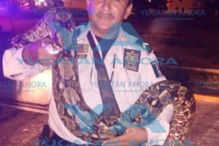 Por la noche 'acechaba anaconda' a familia de la Nueva Reforma Agraria