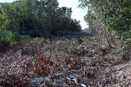Evidencian y denuncian mega 'ecocidio' en la biosfera de San Felipe – Ría Lagartos