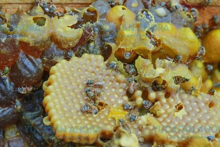 La Reserva Cuxtal abre sus puertas para proteger a las abejas