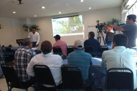 Campesinos yucatecos dicen adiós a los agroquímicos: combaten plagas con Vel Rosita
