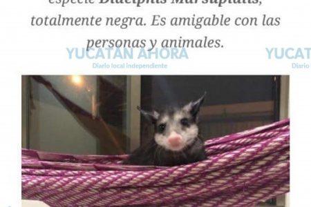 Los avisos de mascotas extraviadas en Mérida, cada vez menos 'tradicionales'