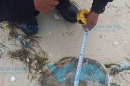 Descabezada la encuentran en playas de Chicxulub Puerto