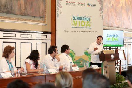 Ambicioso plan de reforestación con múltiples beneficios
