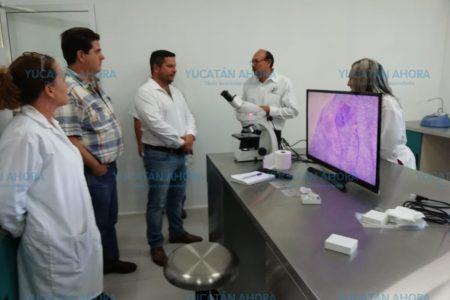 Nueva herramienta para ubicar productos yucatecos en mercados internacionales