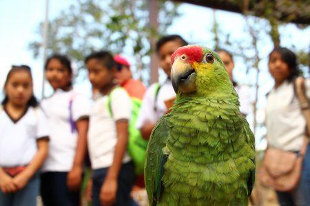 Este viernes las bodas colectivas en la Feria Yucatán