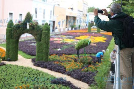 Concluye el Camino de Flores: miles de personas lo visitan
