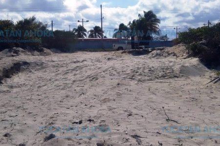 Sin temor destruyen vegetación en humedales y zona costera