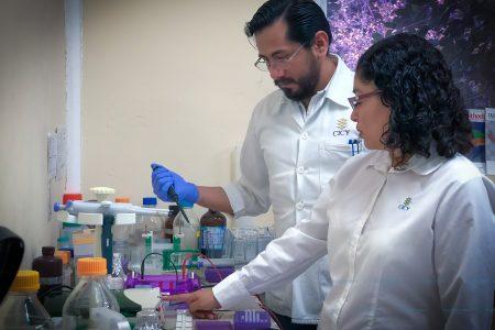 Preparan en Yucatán antibiótico de chile habanero contra bacterias resistentes