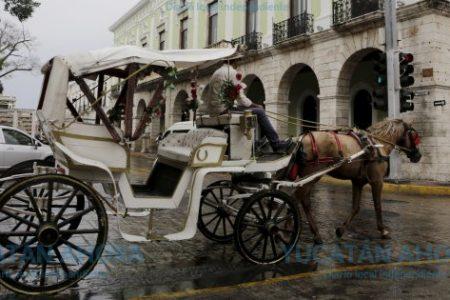 Firmes en Mérida las calesas tiradas por caballos