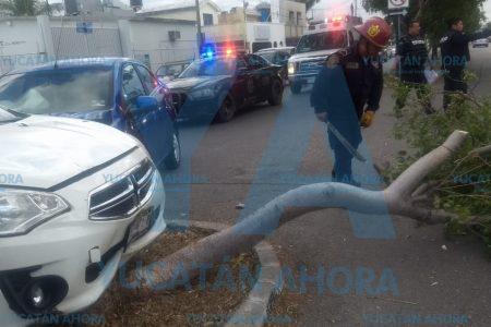 Árbol de chaká paga las consecuencias de un descuido al volante
