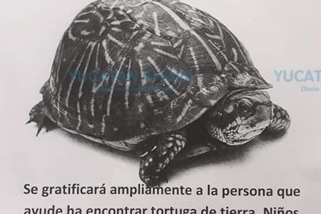 Familia meridana ofrece recompensa por ayudar a localizar una tortuga de tierra