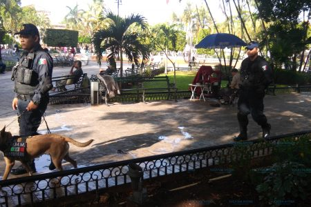 Más de 600 detenidos en el centro de Mérida durante las fiestas de diciembre