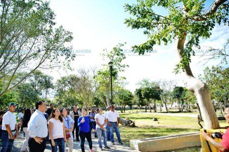 En Mérida se cuidan los árboles como en Londres y Madrid