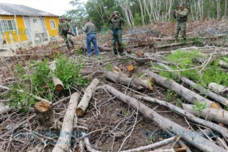 No les importó que sea área natural protegida, arrasaron con el manglar