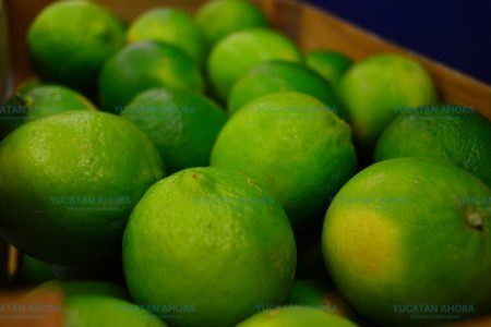 El limón persa de Yucatán va por la conquista de mercados internacionales