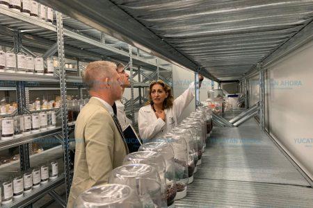 Muestran a embajador de Nueva Zelanda avance científico de Yucatán